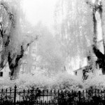 Black-and-white infrared print, 2000