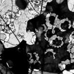 "Silver gelatin print, 2002, 10"" x 8"""