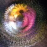 Colour transparency, 2003